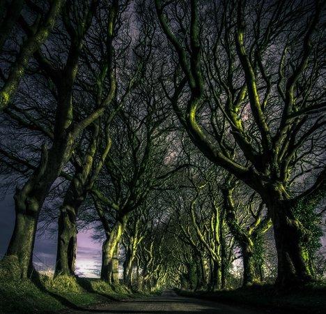the-dark-hedges