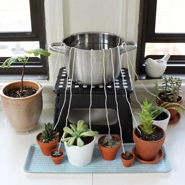 ¡Aprendé a regar tus plantas durante unviaje!